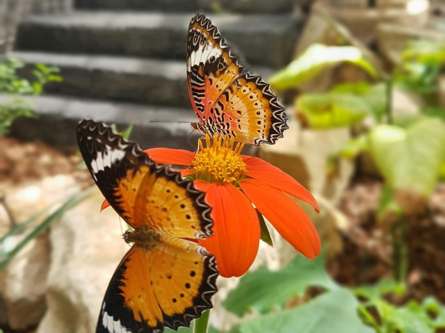 The Butterfly Farm at Stratford-upon Avon