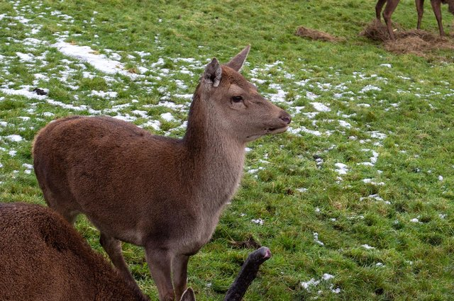 File picture of deer.  Picture Bruce Rollinson
