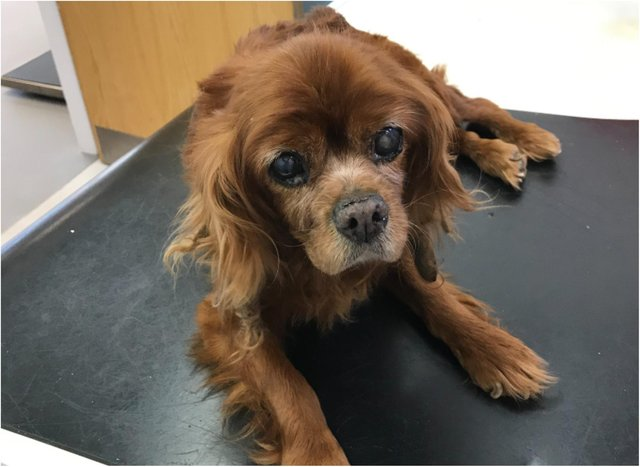 The dog had to be put to sleep after being found dumped in a Doncaster street.