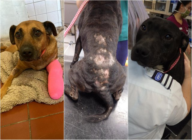 Both dogs were found to be suffering at a house in Doncaster.