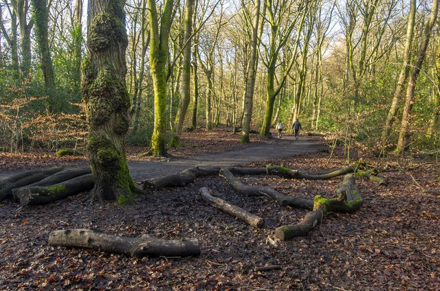 A pioneering project based in Yorkshire plans to connect more people with nature over the coming years