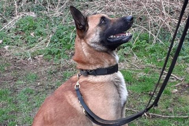 """Dan has worked for SYP for 12 years, working on the Sheffield Response Team before more recently within the Violent Crime Task Force. He has been partnered with PD Louis, a three year-old Belgium Malinois. Dan said: """"I wanted to become a dog handler as dogs bring additional skills that you as an officer don't have, no matter what equipment or training you undertake. """"Me and PD Louis have been bonding well and I am looking forward to catching criminals and for Louis to settle into our home life where he will become part of our family."""""""
