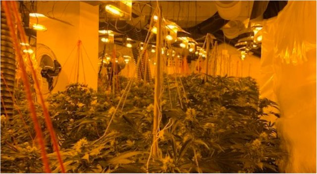 A man arrested over a cannabis farm in Mexborough is being treated as a possible victim of human trafficking