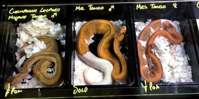 Snakes for sale at a previous event. Picture by World Animal Protection