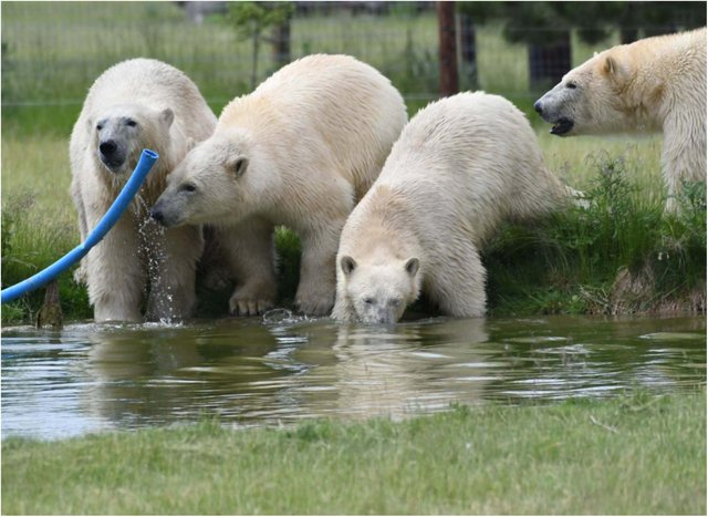 YWP has four new bears.