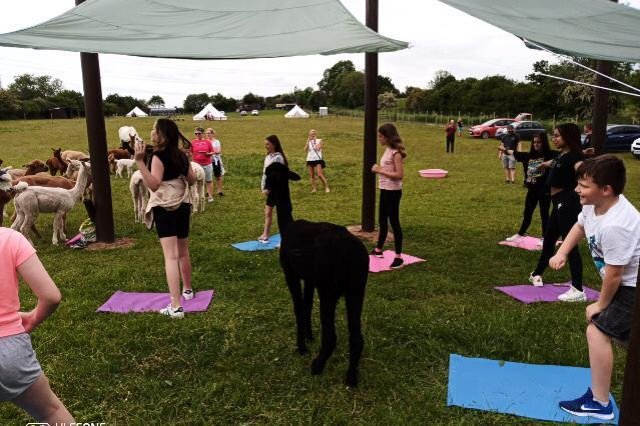 Yoga with alpacas is now available here in Doncaster.