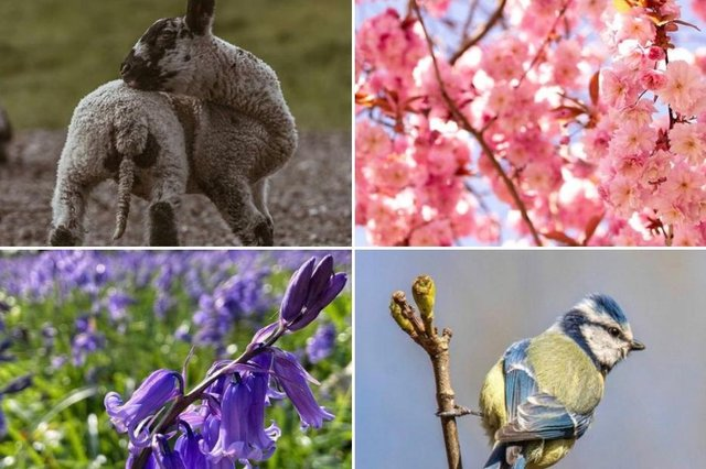 10 lovely spring photos taken in Doncaster.