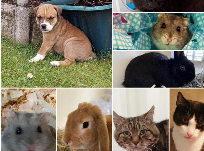 These animals are looking for new homes