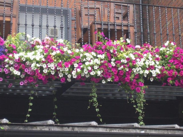 Some of the hanging baskets similar to the ones stolen in Doncaster town centre.
