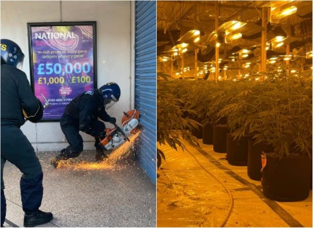 Police found hundreds of cannabis plants in a raid on a bingo hall.