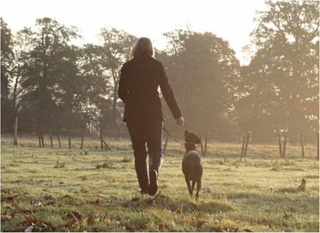 Doncaster's Cusworth Hall is among Yorkshire's most dog friendly places.
