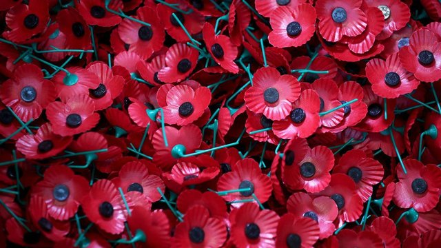 Poppies will be sold across the UK as normal this year.
