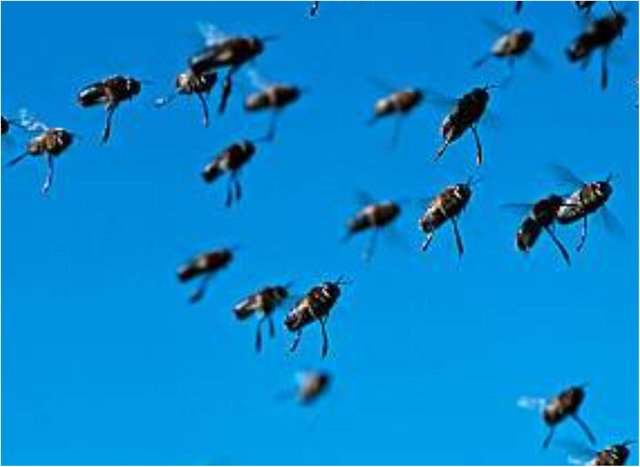 A swarm of bees has set up home in a Thorne bus shelter. (Photo: Getty)